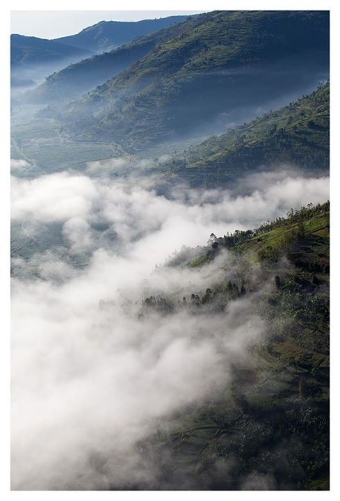Virunga Arial View.