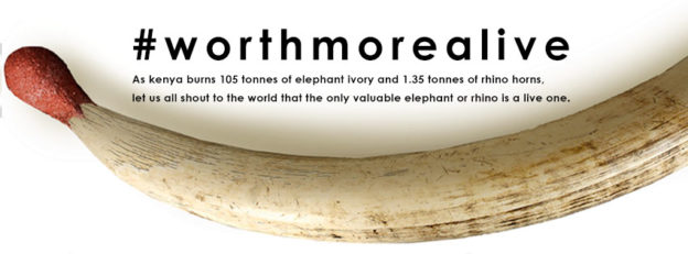worthmorealive-elephant-ivory-burning-Kenya