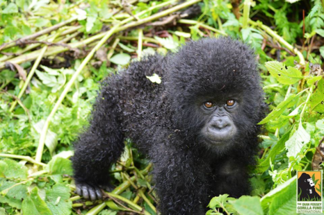 Tebuka Volcanoes Safaris' new baby