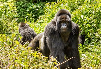7-Day Virunga and Kyambura