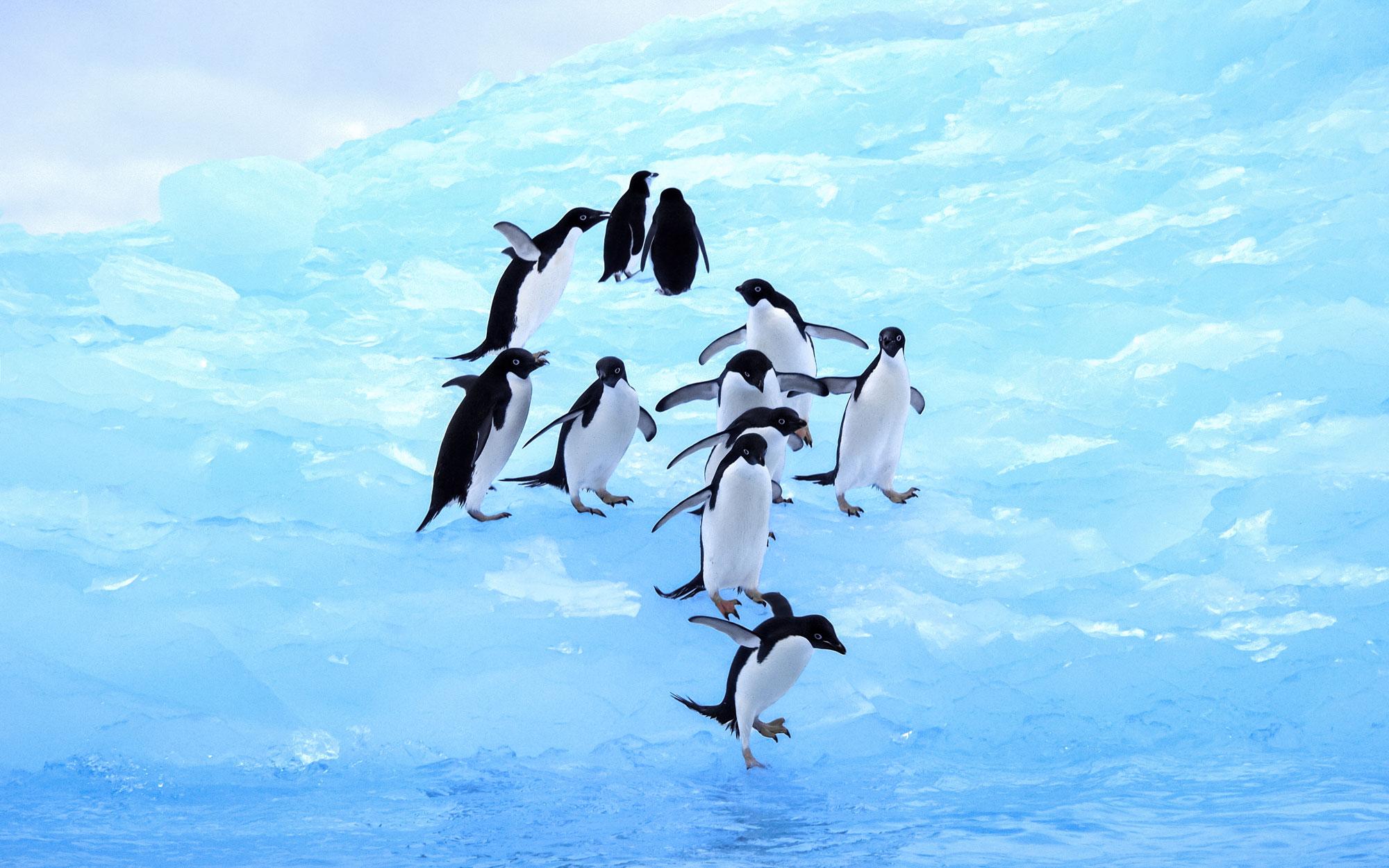 Penguins-LM-web