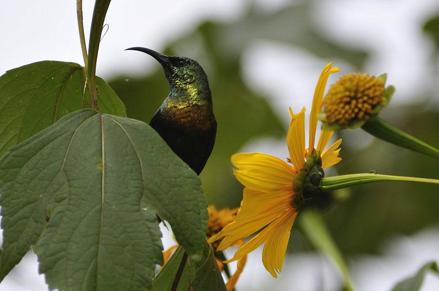 14 Bird