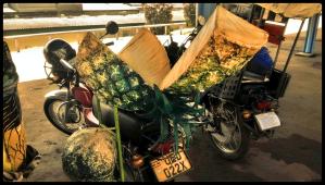 Pineapple bike.
