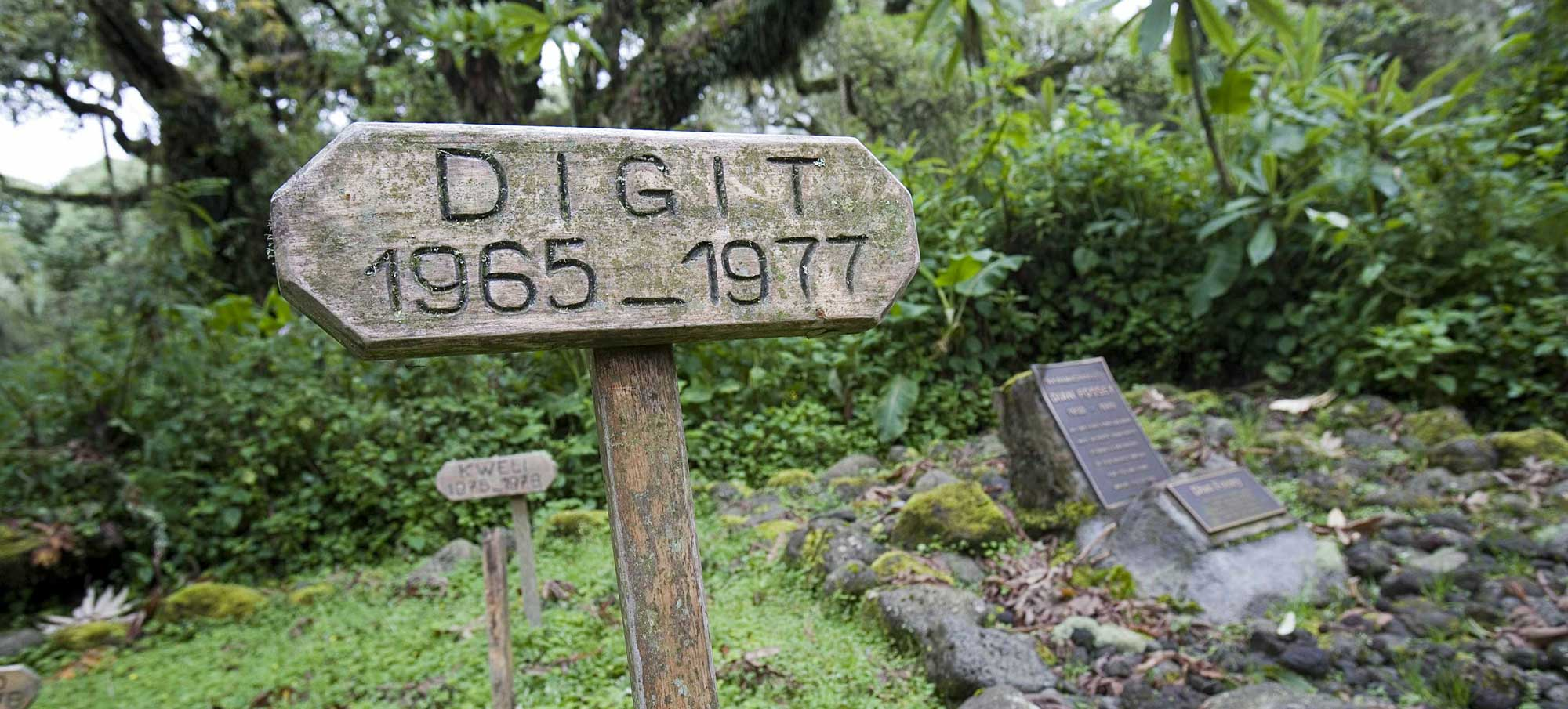 Dian Fossey is buried next to the grave of her favourite gorilla Digit