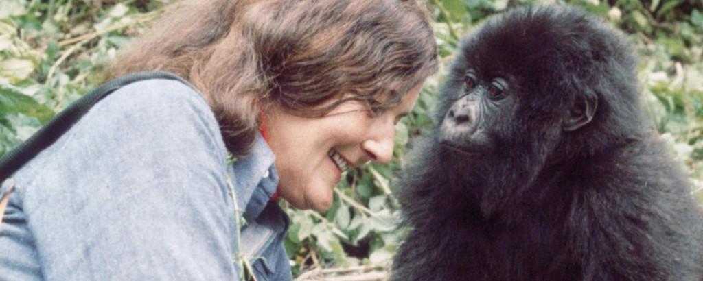 Dian Fossey and gorilla. PHOTO Ian Redmond