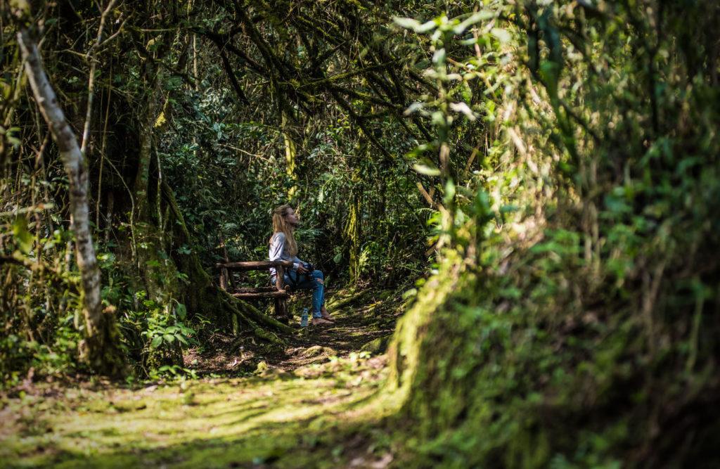 Bwindi Lodge nature trail