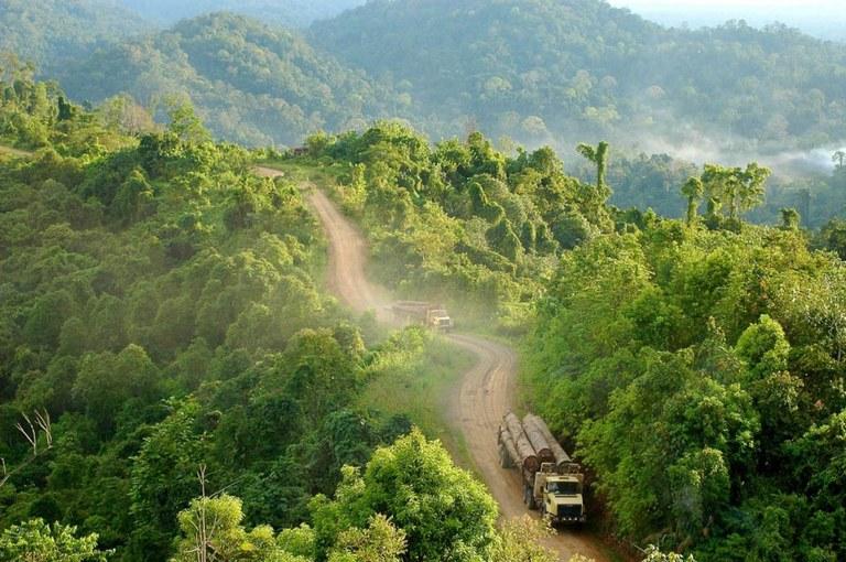 congo-basin-logging-via-earthjournalism-net