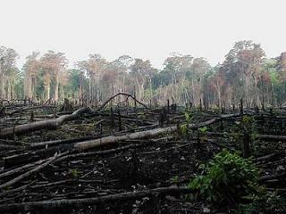 deforestation-in-rainforest-via-congo-basin-preservation-initiative